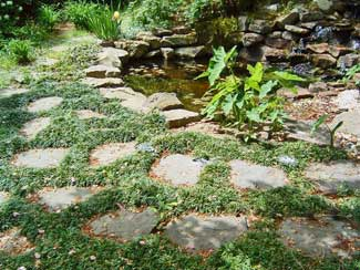 mondo grass and stepping stones